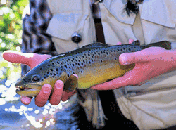 Additional public meeting set on statewide inland trout